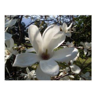 Camellia Blosson Postcard