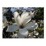 Camellia Blosson Postcards