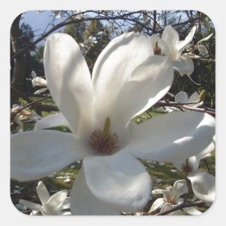 Camellia Blosson Square Sticker