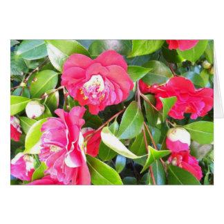 Camellia Bush in Bloom Card