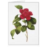camellia(Camellia anemonefolia) by Redouté Greeting Card