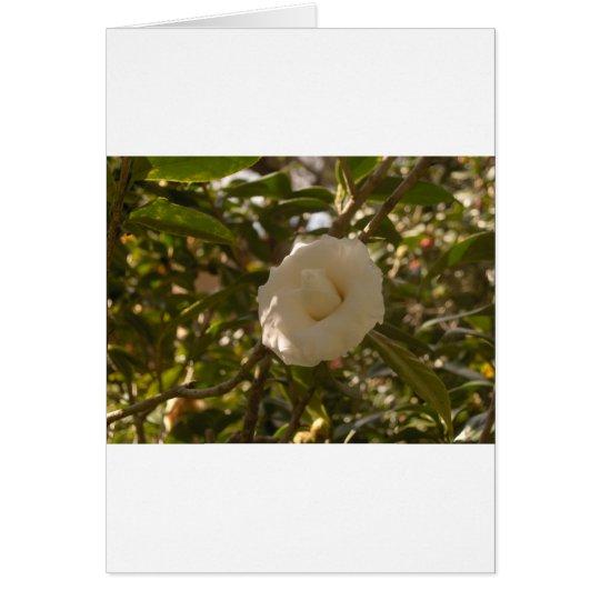 Camellia Card