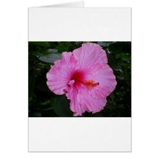 camellia cards