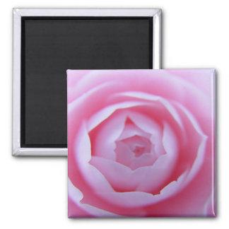 Camellia Closeup Magnet