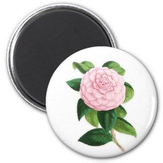 Camellia, Duchesse De Nassau Magnet