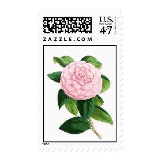 Camellia, Duchesse De Nassau Postage