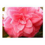 Camellia flower postcard