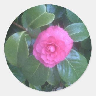Camellia Flower Stickers