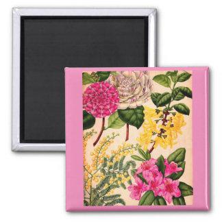 camellia, forsythia, rhododendron and acacia magnet