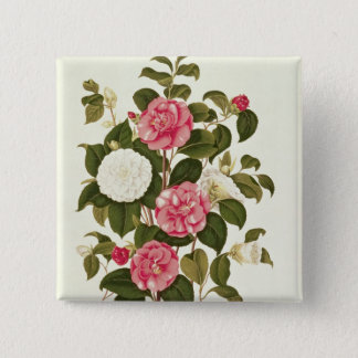 "Camellia  from ""A Monograph on the Genus' Pinback Button"