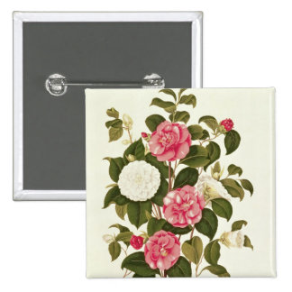 """Camellia  from """"A Monograph on the Genus' Pinback Button"""