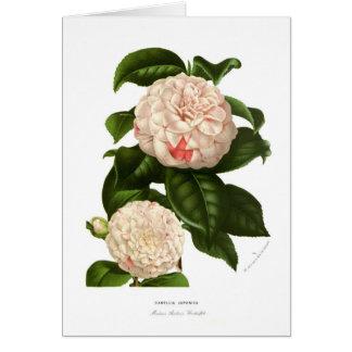 Camellia japonica card