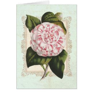 Camellia Japonica Pink and White Vintage Botanical Card