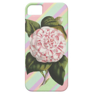 Camellia Japonica Pink and White Vintage Stripes iPhone 5 Cases