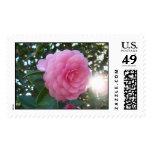 Camellia Japonica Postage Stamp
