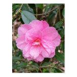 Camellia Japonica Postcard
