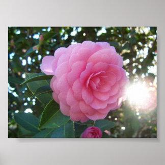 Camellia Japonica Print