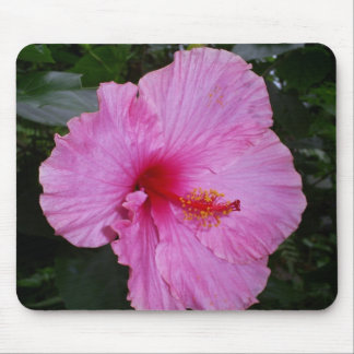 camellia mouse pads