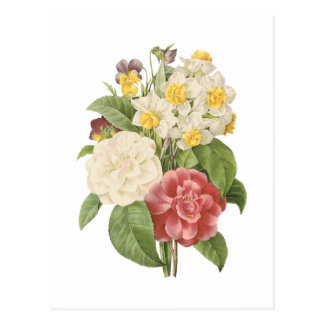 camellia, narcissus, pansy by Redouté Postcard