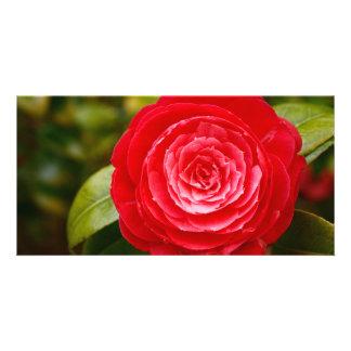 Camellia Photo Card