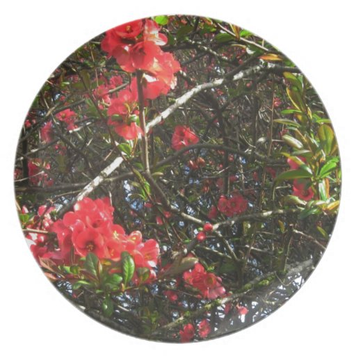 Camellia, photograph party plate