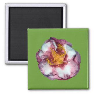Camellia Pink Gift Magnet