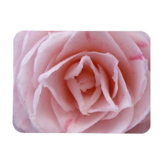 Camellia - Pink Magnet