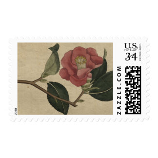 Camellia Postage