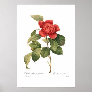 Camellia Poster