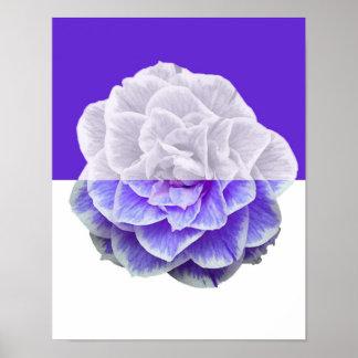 Camellia purple halves poster