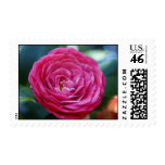 Camellia Stamps