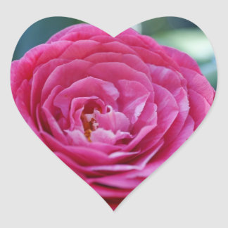 Camellia Stickers