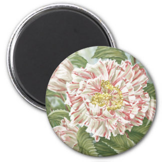 Camellia Striped Garden Flowers Painting Magnet