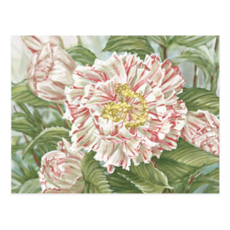 Camellia Striped Garden Flowers Painting Postcard