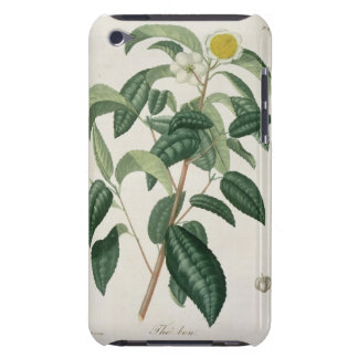 Camellia Thea from 'Phytographie Medicale' by Jose iPod Touch Cover