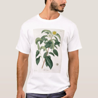 Camellia Thea from 'Phytographie Medicale' by Jose T-Shirt