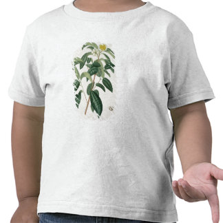 Camellia Thea from 'Phytographie Medicale' by Jose Tshirt
