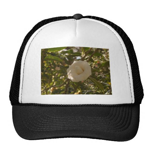 Camellia Trucker Hat