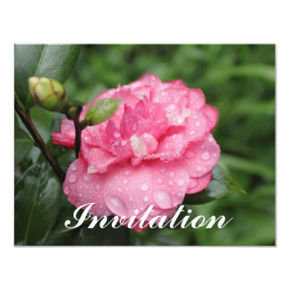 Camellia with water drops card