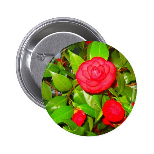 Camellias in Bloom Buttons