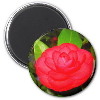 Camellias in Bloom Magnet