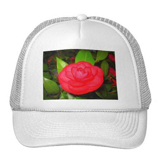 Camellias in Bloom Trucker Hat