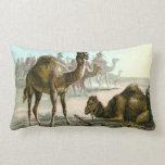 Camello árabe almohada