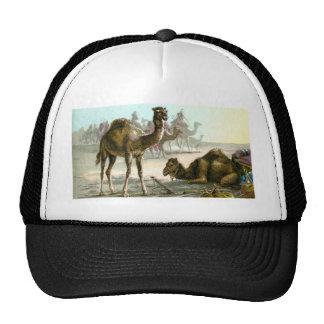 Camello árabe gorros bordados