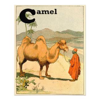 camello bactriano de la Dos-chepa en el desierto Fotografías