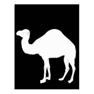 Camello blanco postal