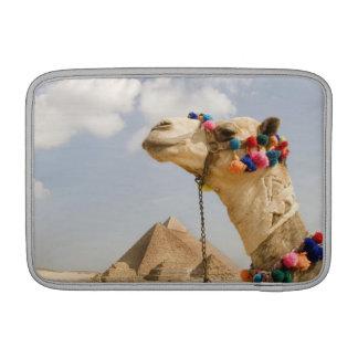 Camello con las pirámides Giza, Egipto Funda MacBook