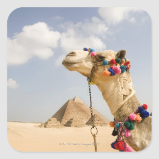 Camello con las pirámides Giza, Egipto Pegatina Cuadradas