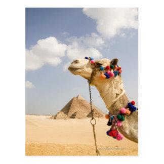 Camello con las pirámides Giza, Egipto Postal