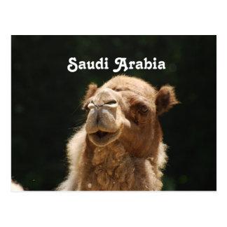 Camello de Arabia Saudita Tarjeta Postal